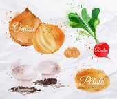 stock photo of cucumbers  - Vegetables set drawn watercolor blots and stains with a radishes - JPG