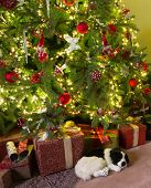 Sleepy dog lying under the decorated christmas tree
