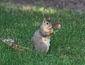 Squirrel And Rose