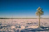 Sunlit Plain