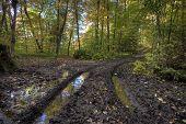 Muddy Road In Autumn