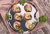 pic of escargot  - escargot - JPG