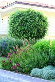 Beautiful landscaping in garden