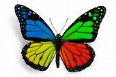 four colors butterfly