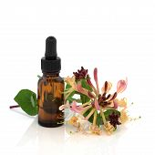 foto of essential oil  - Honeysuckle flower with aromatherapy essential oil brown glass dropper bottle over white background with reflection - JPG