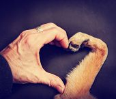 picture of love making  - a person and a dog making a heart shape with the hand and paw toned with a retro vintage instagram filter effect app or action - JPG