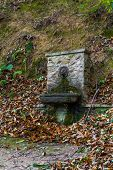 picture of fountain grass  - fountain in the middle of the wood  - JPG