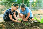 image of mother-in-love  - mother and young daughter planting vegetable in home garden field use for people family and single mom relax outdoor activities - JPG