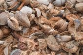 pic of coir  - Dry coconut shells on field in thailand - JPG