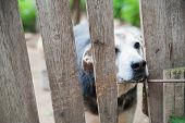 stock photo of stray dog  - Stray dog behind the corral of a dog refuge - JPG