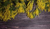 image of mimosa  - Branches of a yellow mimosa on a wooden table - JPG