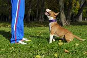 ������, ������: Dog training process