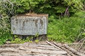 pic of driftwood  - Purple flowers grow between driftwood logs and a cement block - JPG