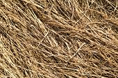 picture of dry grass  - field of old dried yellow grass background - JPG