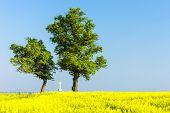 pic of rape-field  - trees and cross with rape field - JPG