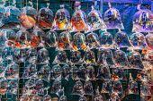 pic of goldfish  - goldfish market Mong Kok Kowloon in Hong Kong - JPG