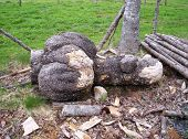 Deformed Log