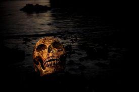 image of morbid  - Still life with human skull in nature - JPG