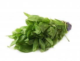 pic of sorrel  - Branch of green polygonaceae sorrel spinach dock herb leaves in a pot - JPG