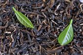 picture of black tea  - black tea with leaf closeup - JPG
