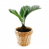 pic of plant pot  - home plant in pot isolated - JPG