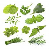 collection of green herb isolated