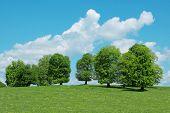 árvores verdes e céu nublado