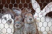 stock photo of rabbit hutch  - small rabbits in cage closeup - JPG