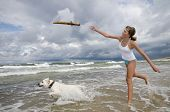 Labrador retriever playing on the beach.