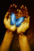 open female hands holding a blue butterfly