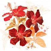 stock photo of hibiscus  - Hibiscus flower  - JPG