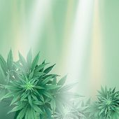 Cannabisbckg2-10 [converted].ai poster