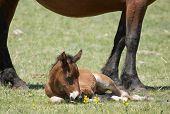 New-born foal