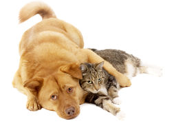 picture of cat dog  - Dog and cat relaxing on white background - JPG
