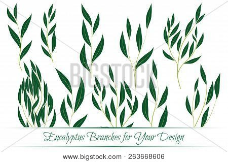 Eucalyptus Branch  Decorative Greenery Of Rustic Wedding  Vector Eucalyptus  Leaves Set  Elegant Flor poster
