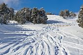 Ski Slope For Freeride With Fir-trees In Snow. Traces From Skis And A Fir-tree Covered With Snow In  poster