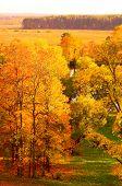 Orange autumn park in Arkhangelskoe, Russia