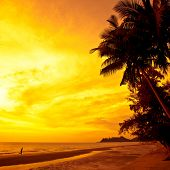 Coconut palms and sand beach, man running on sunset. Thailand, Koh Chang, Kai Bae beach