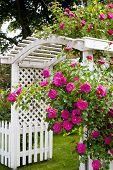 Uma árvore rosa e moirões em um jardim do país.