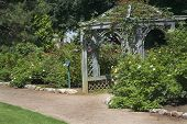 A large wooden arbor in a rose garden.