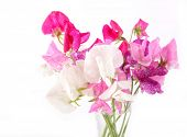 image of sweet pea  - Sweet pea flowers in a glass vase - JPG