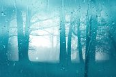 Autumn Morning Forest Through The Window Glass In The Rain. Glass Wet Autumn Background. Wet Window  poster