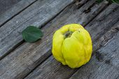 Fresh Quince Fruits On Wooden Table. Still Life Of Food. Exotic Fruits. Autumn Harvest. Weird Fruit. poster
