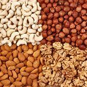 Nuts (hazelnuts, almonds, cashews, walnuts and filberts)