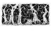 Vector Black And White Hand Drawing Of Scary Magic Fantasy Horror Forest With Deformed Old Trees And poster