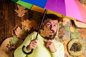 Fall Atmosphere Attributes. Rainy Weather Forecast Concept. Man Bearded Lay On Wooden Background Wit poster