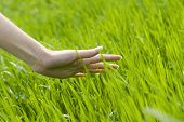 woman's hand  touching the grass, 'feeling nature'