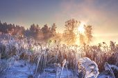 Winter Landscape In Pink Sunlight At Morning Sunrise. Scenery Winter. Frosty Nature. Sunlight In Win poster