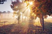 Autumn Nature Landscape In Clear Morning With Vivid Sunshine. Colorful Trees In Vibrant Sunlight. Br poster