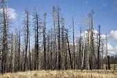 Forest Fire (Ah)